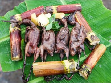 chim mia Quang Ngai