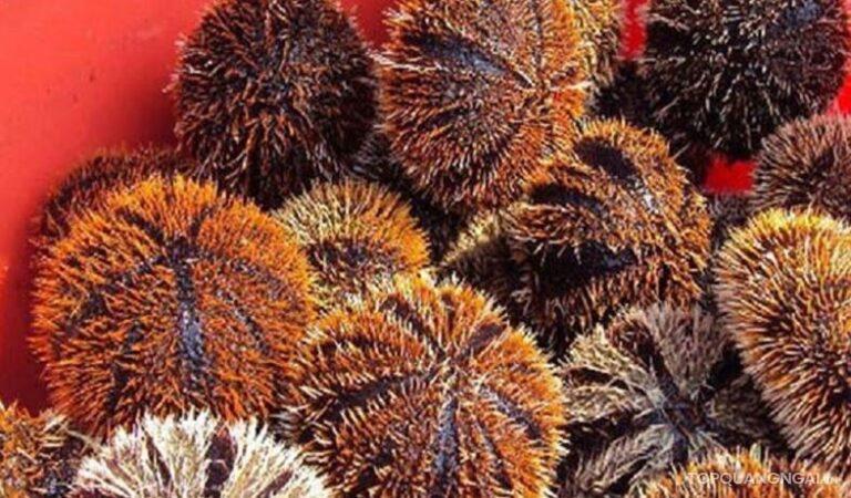 Xiêu lòng với top 5 các món ngon từ nhum biển Lý Sơn