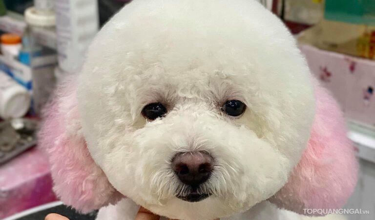 Top 4 dịch vụ cắt tỉa lông thú cưng Quảng Ngãi tốt nhất